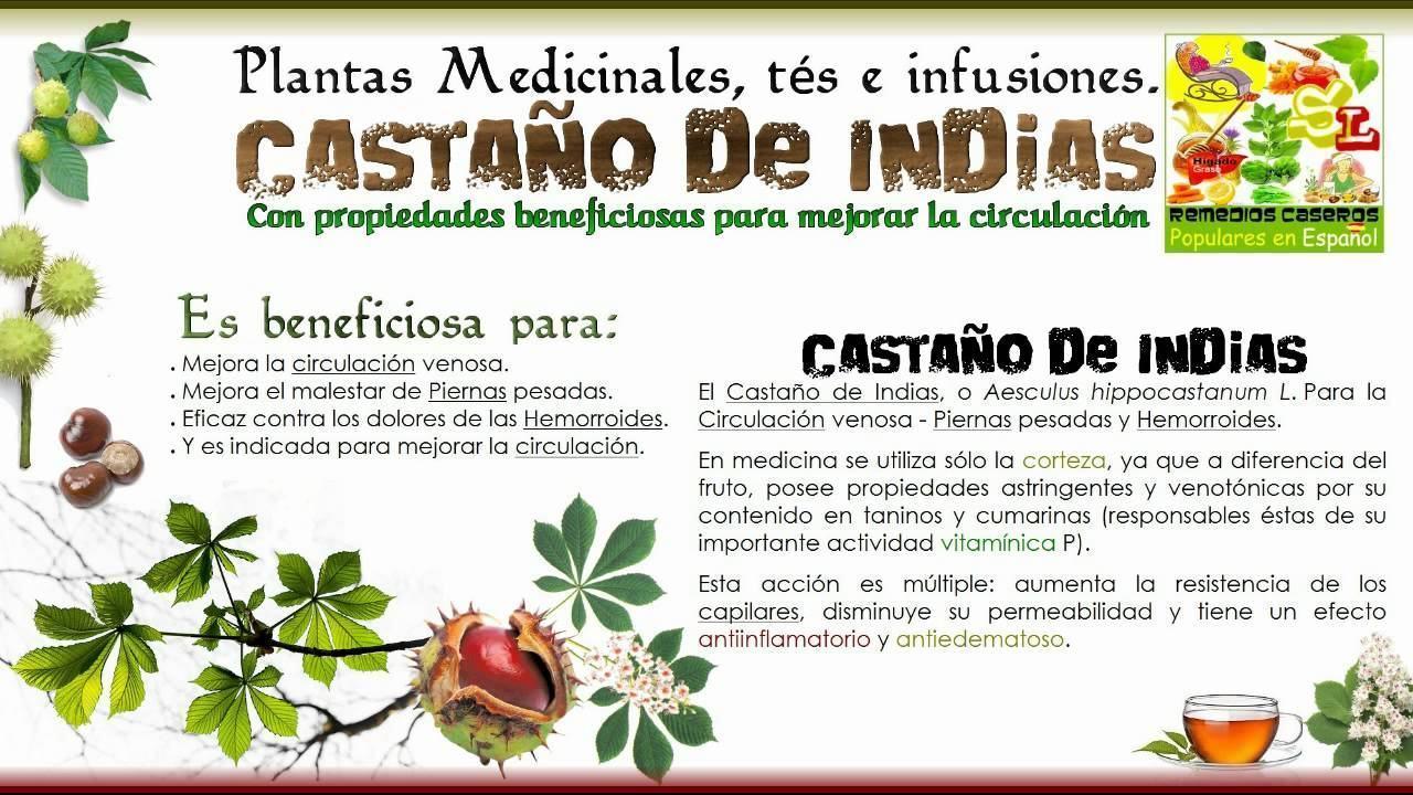 Casitodoonline--Castaño de Indias